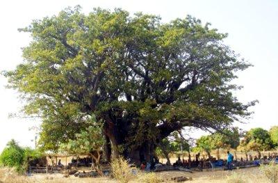 cucina-senegalese-baobab