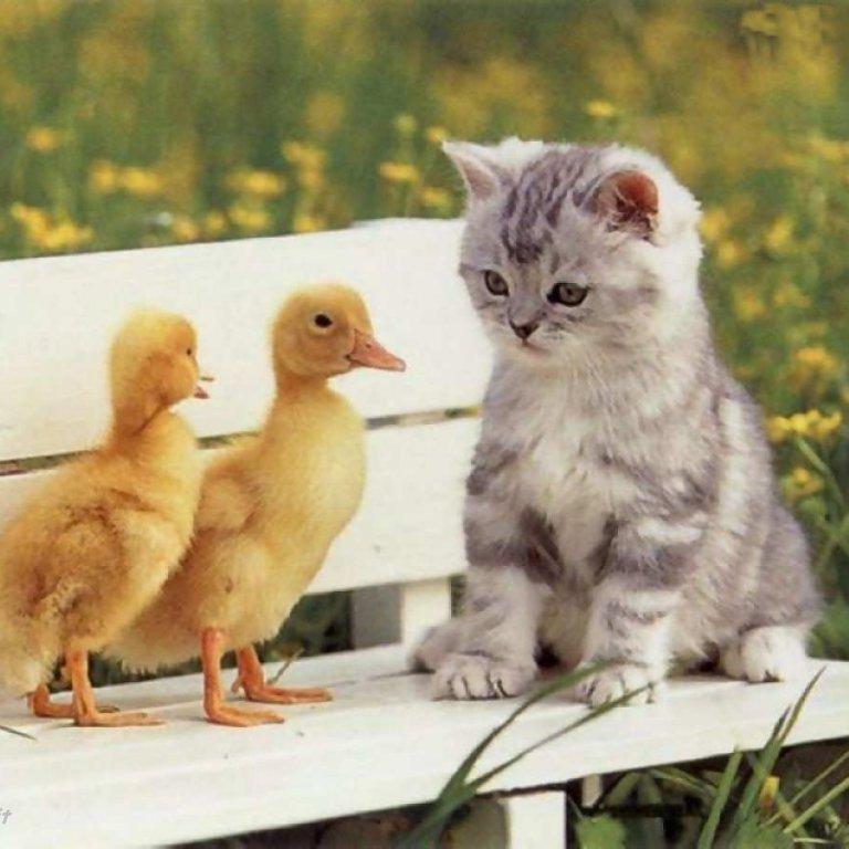 gatto-papera