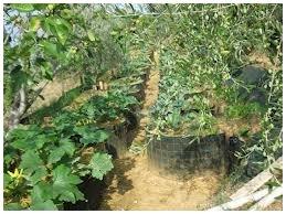 permacultura firenze