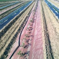 agricoltura-biodinamica