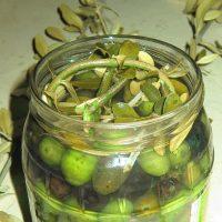 olive icona