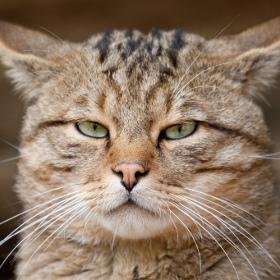 gatto sterilizzare