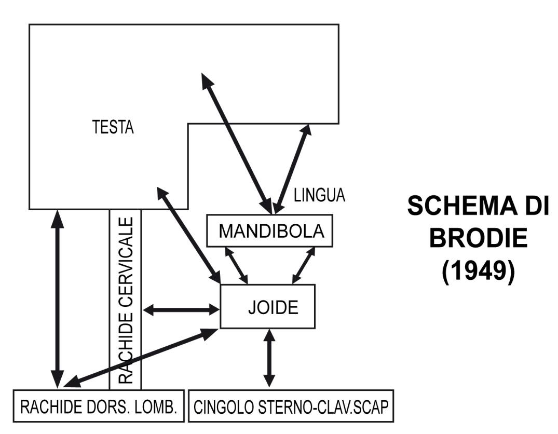 biolcalenda-febbraio-2014-lingua-deglutizione-bastianello-schema-brodie