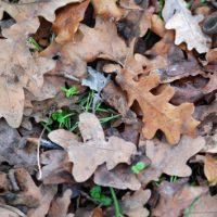 foglie-fioravanti