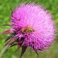 fioravanti-fiori-prevenzione