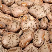Il fagiolo - Ortaggio del mese Biolcalenda settembre