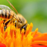 Corso di apicoltura biodinamica - Padova