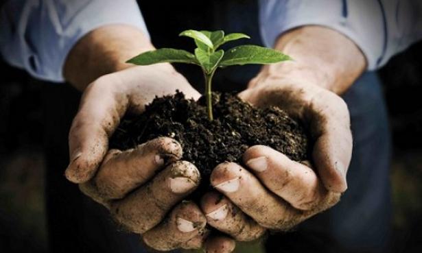 Agricoltura biodinamica vitalità