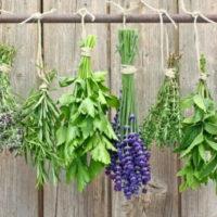 Piante aromatiche, alleate di salute e bellezza