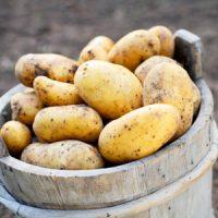 patata-bologna