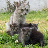 mamma gatta gattini