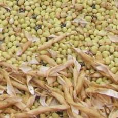 Ricette de La Biolca - fagioli-gialet