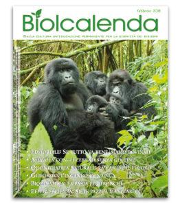 Biolcalenda di febbraio 2018 - mensile dell'associazione La Biolca. In copertina gorilla di montagna - Virunga park, Congo