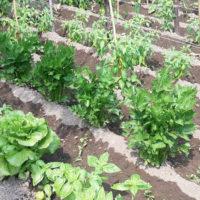 Le consociazioni vegetali - 2a parte