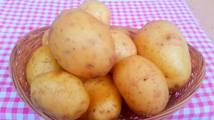 Patata - Biolcalenda di Novembre 2018