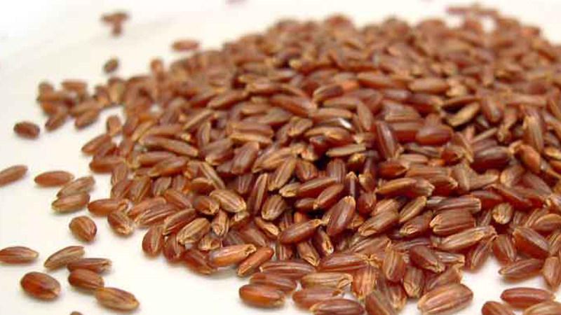 Il riso rosso - Biolcalenda di Febbraio 2019