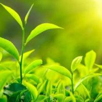 Corso Il segreto linguaggio delle piante