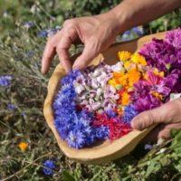 """Piante alimurgiche: le """"erbacce"""" dalle eccellenti qualità"""