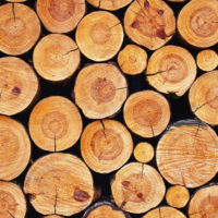 Ma il legno è davvero sostenibile?