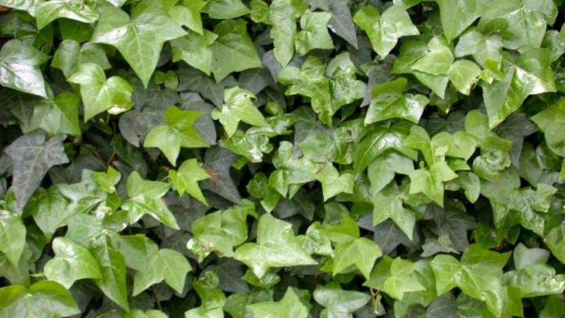 Ruolo ecologico, funzione e utilità della flora spontanea