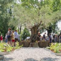 Passeggiata Botanica al Parco Buzzaccarini di Monselice